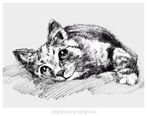 【hamの铅笔画】猫