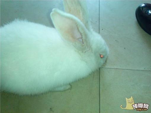 基因突变?兔子吃鱼!