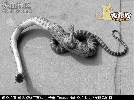 动物 蛇 451_336