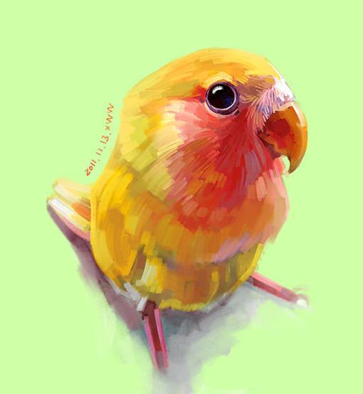 超萌动物鹦鹉图片