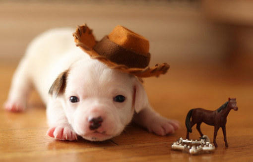 2012年最可爱的动物宝宝照片 小奶狗
