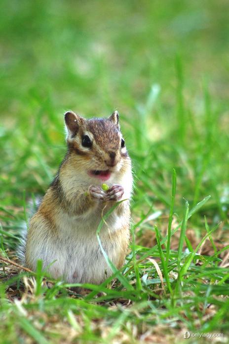 小松鼠快长大绿树叶新枝芽