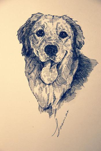 可爱手绘狗狗~~么么