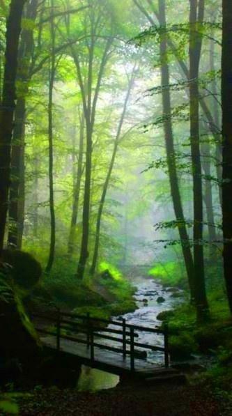 我知道在森林中一个点,坐在青苔看着小气泡漂浮,它们在水里的影子看图片