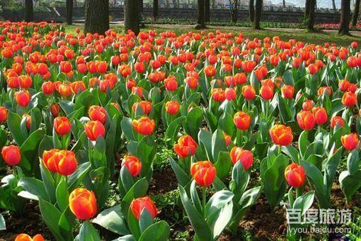 武汉植物园风景美图