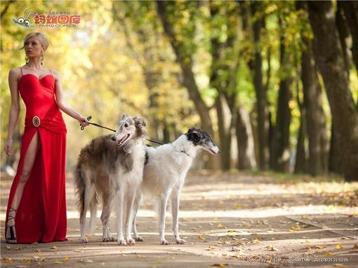 牵着狗的美女图片素材
