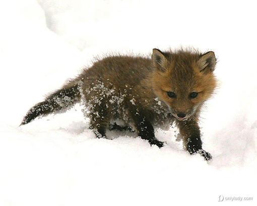 最可爱的动物宝宝照片