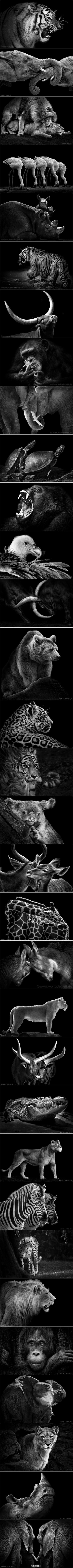 相爱后动物感伤谱