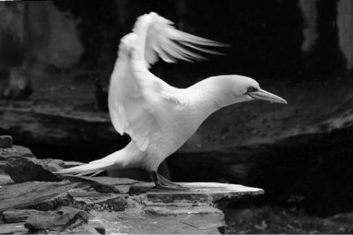动物黑白摄影作品