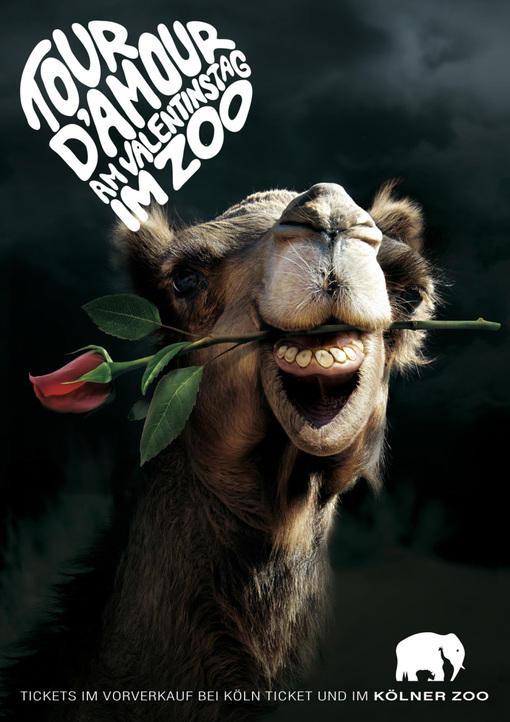 科隆动物园的创意海报广告-ux创意杂志