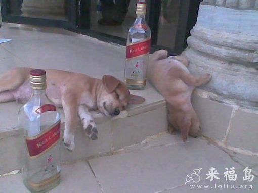 喝醉的可爱图片