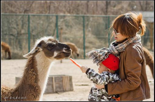 趣拍北京野生动物园 图片