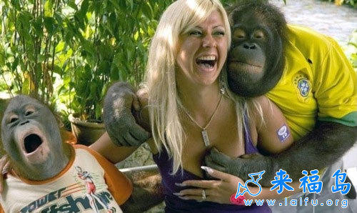猩猩调戏美女
