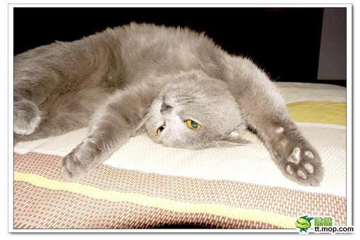 【酷酷宝贝】眼睛发亮的可爱小猫咪
