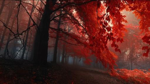 大自然的树木暗红色的户外森林