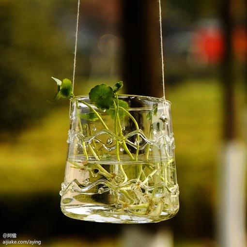 手工吹制悬挂玻璃瓶 晶莹花纹杯子水培花瓶容器