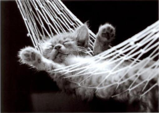 动物黑白摄影作品 图片