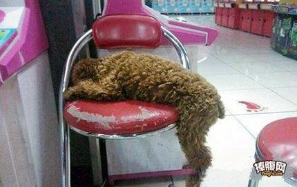 阿汪居然如此销魂的睡了