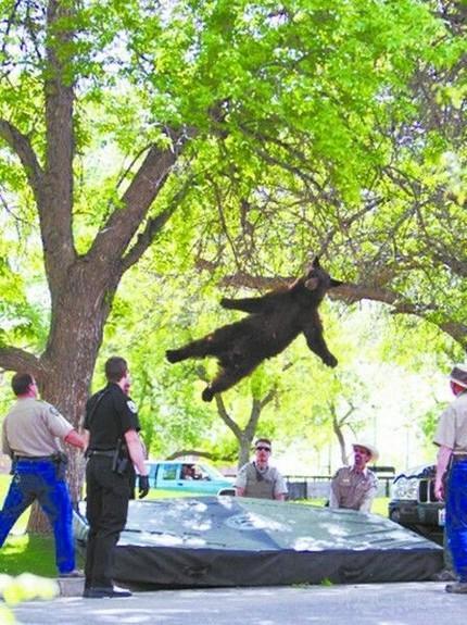 台风口的熊,见过吗?