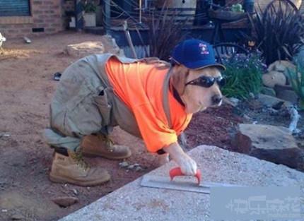 农民工最光荣,给我们建设家园!