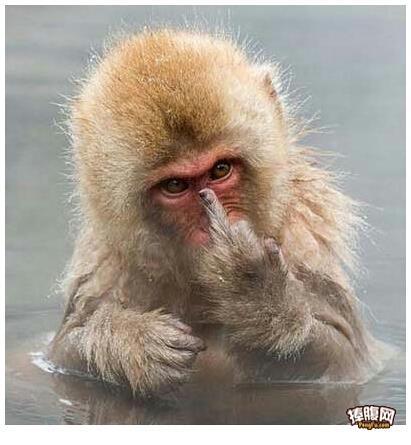 猴子可爱搞笑图片