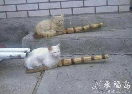 这是你们的魔法扫帚吗