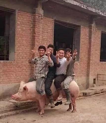 你们考虑过猪的感受吗