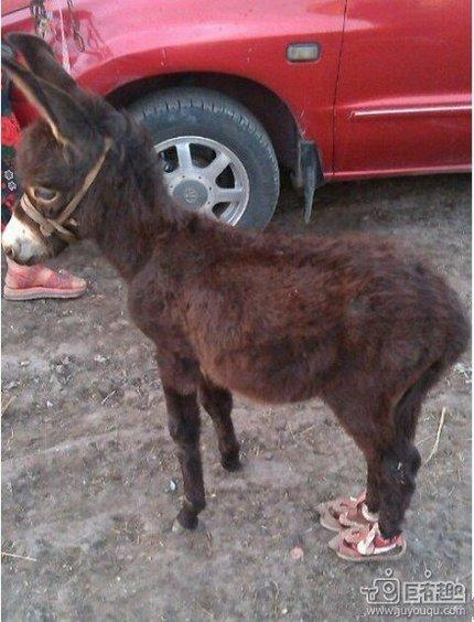 穿表情的小驴_搞笑_hao123上网导航在线制作一个鞋子动态图片