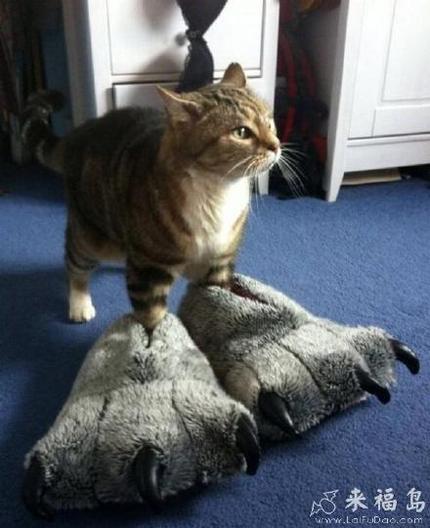 主人,快看!我的脚丫大不大!