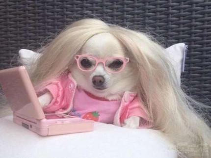 粉嫩芭比汪,我想和你做朋友