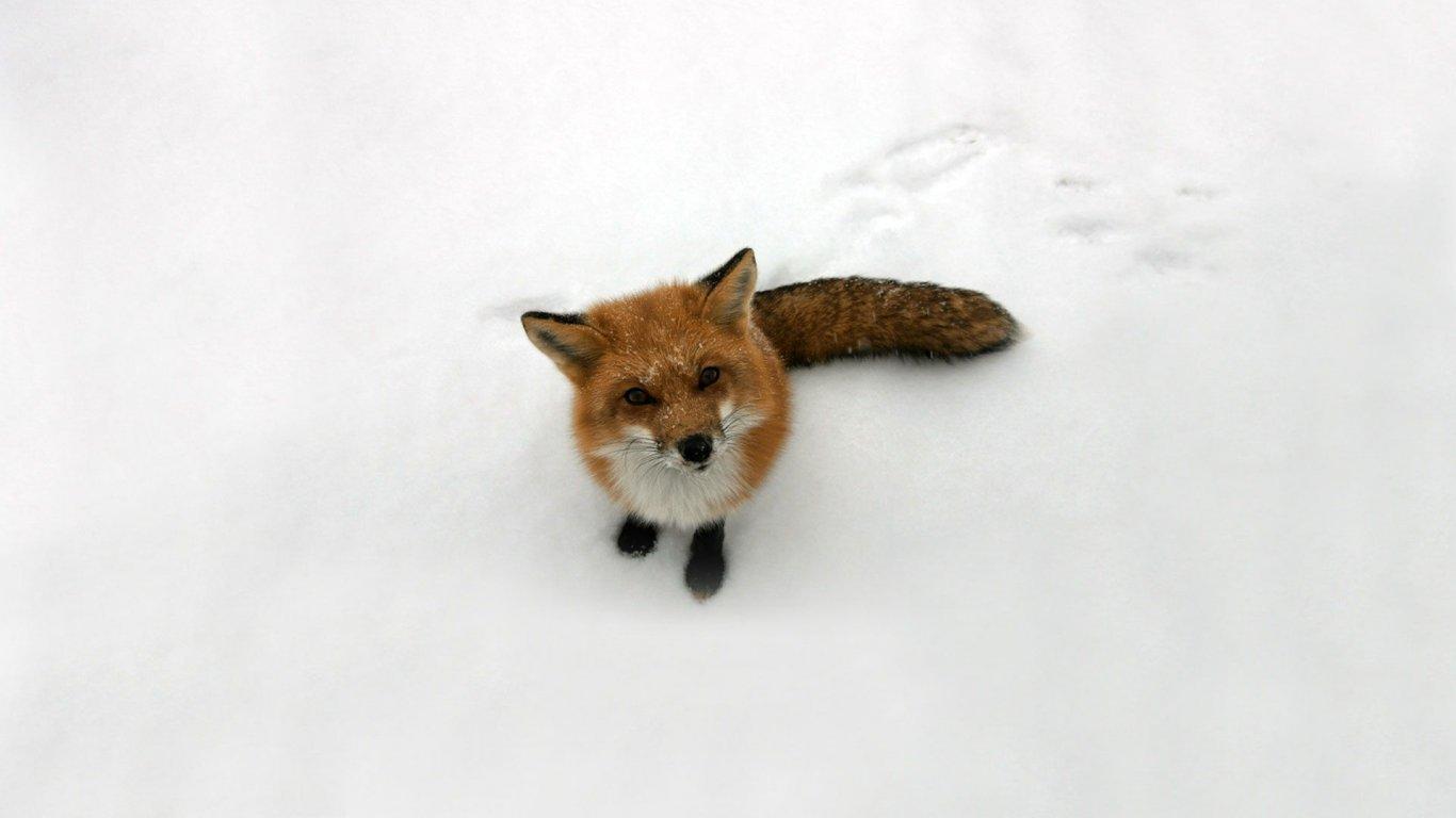 萌宠狐狸图片手绘