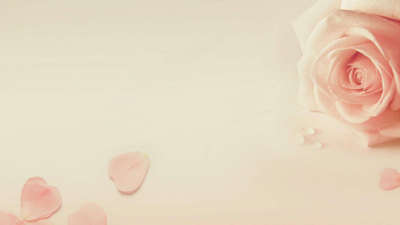 创意桌面壁纸_爱情美图壁纸_唯美温馨壁纸_玫瑰壁纸