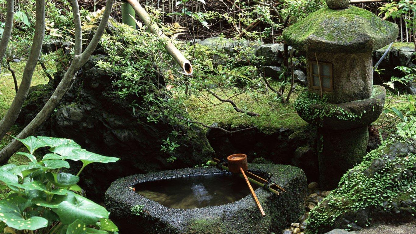 风景 森林 桌面 1366