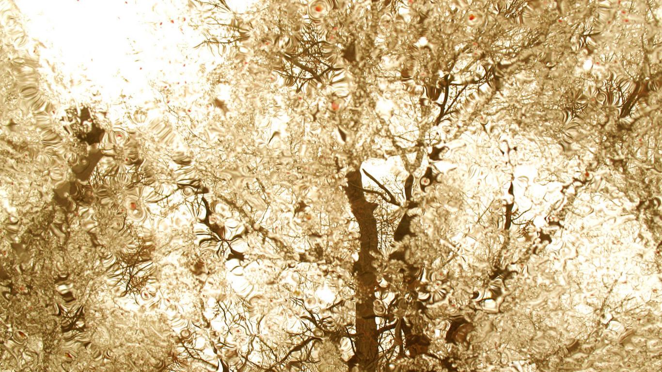 漂亮的雨滴 高清风景壁纸